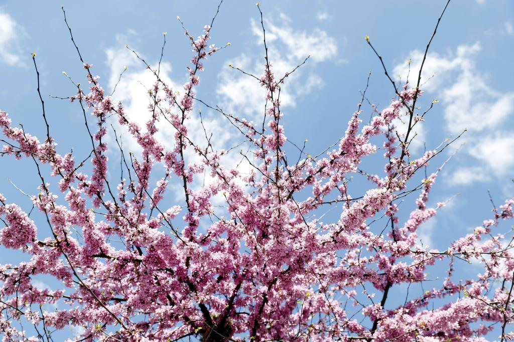 Un árbol en Bilbao en plena floración.