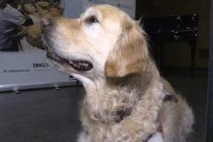Zenit, el perro que reduce el dolor de los niños enfermos