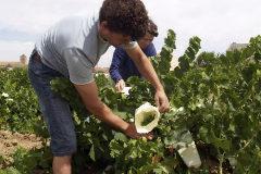 Prohibido, despreciado y mal vendido: el éxito (a pesar de todo) del vino blanco en España