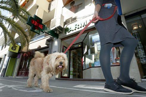 Un perro paseando por las calles de Alicante, en imagen de archivo.