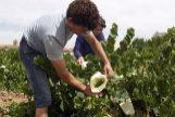 El éxito (a pesar de todo) del vino blanco en España