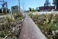 Un raíl del tranvía de San Fernando a Chiclana de la Frontera, sin estrenar todavía, y rodeado de yerbajos.