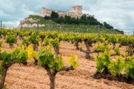 Imagen de viñedos en Castilla y León