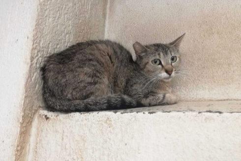 Imagen de un gato tomada en el Zoosanitario de Sevilla.