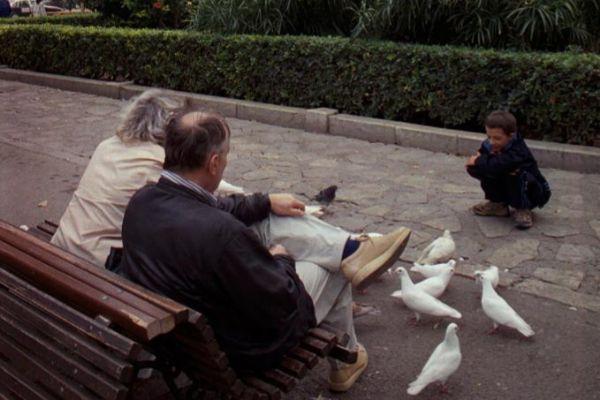 Alimentar palomas en Palma cuando la Plaza de España las tenía.