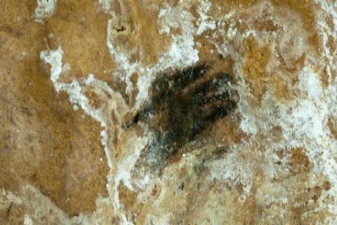 El misterio de la mano del niño de la cueva de Altamira