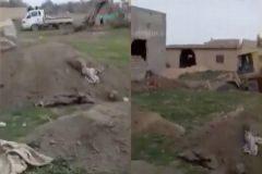 Fosas comunes en el ex califato de Siria. Al menos 50 esclavas del ISIS fueron decapitadas y enterradas allí con sus hijos.