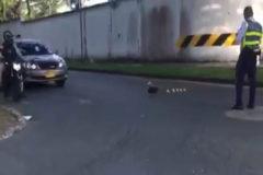 La aplaudida decisión de este policía con una familia de patos