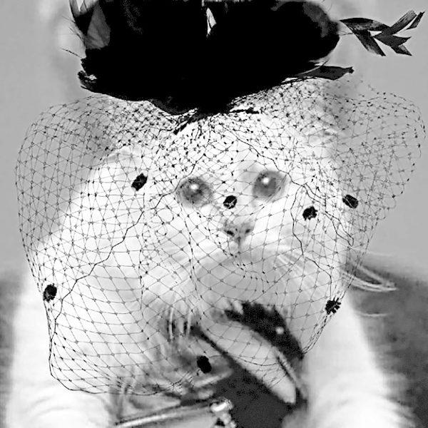 Imagen de la gata de Karl Lagerfield en redes sociales subida el 21 de febrero, dos días después de la muerte de su dueño.