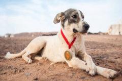 El perro que terminó una de las maratones más duras