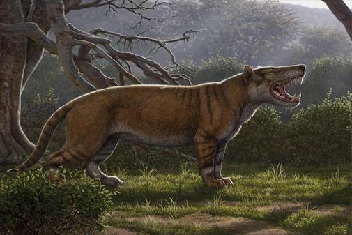 Identifican fósiles del mamífero más grande que ha pisado la Tierra