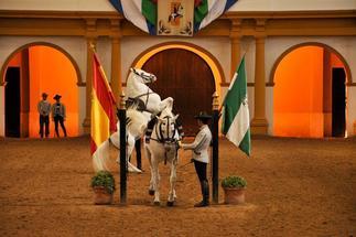 La Real Escuela de Arte Ecuestre de Jerez celebrará un total de 106 exhibiciones hasta final de año