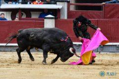 Ortega resucitó el clásico toreo a la verónica