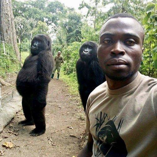 Ndakazi y Ndeze: las tragedias que esconde el 'selfie' con los gorilas