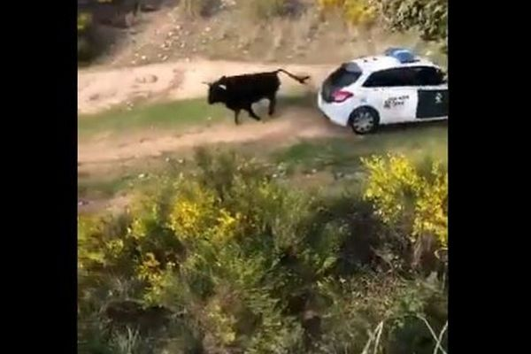 El animal junto a un coche e la Guardia Civil.