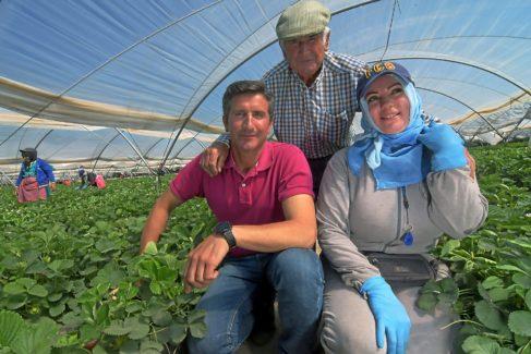 El agricultor Cristóbal Picón, su padre Vicente y la temporera Zahra Naime, en su finca de fresas de Lucena del Puerto (Huelva)