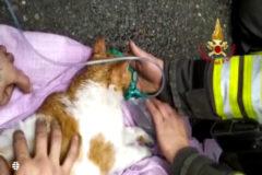 Bomberos reaniman a dos gatitos tras un incendio