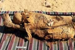 Restos de momias hallados en la tumba