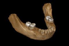 Reconstrucción de la mandíbula hallada en China.