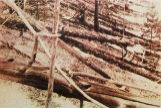 La destrucción causada por el impacto de un meteorito en Tugunska en 1908