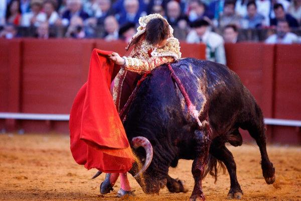 Extraordinario pase de pecho de Roca Rey al no menos extraordinario toro de Núñez del Cuvillo en la Maestranza de Sevilla