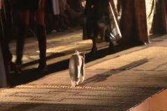 Un gato se cuela en el desfile de DIOR en Marruecos