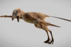 Reconstrucción en 3D de 'Ambopteryx longibrachium'