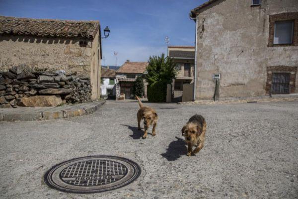 Dos perros pasean por las calles del centro de Madarcos.