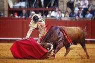 Profundo derechazo de Miguel Ángel Perera al notable 'Aperador' de Santiago Domecq, este jueves, en la Maestranza
