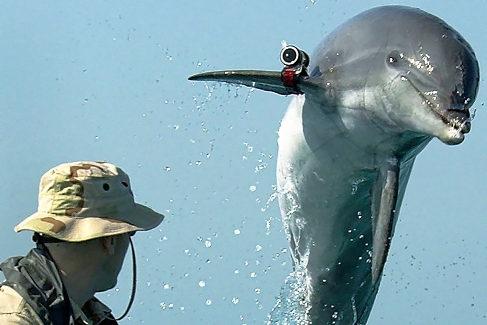 Un soldado junto a un delfín militar en el Golfo Pérsico.
