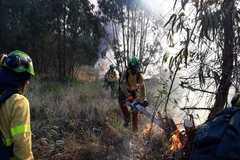 Bomberos forestales trabajan en la extinción del incendio declarado este fin de semana en La Borrachuela, en Almonte (Huelva).