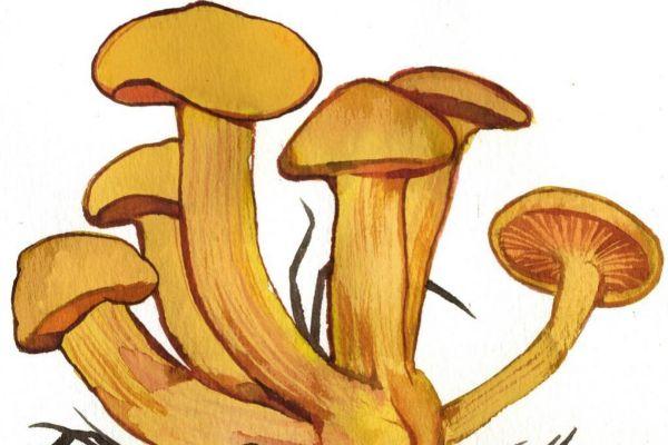 Más de 100 especies de setas contienen psilocina.