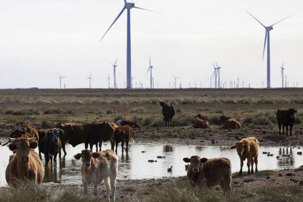 Complejo eólico Peñascal de Iberdrola en el Estado de Texas.