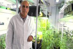 El investigador valenciano Salvador Soler posa en la cámara de la UPV donde su cultiva el 'Cannabis sativa', motivo de su proyecto.
