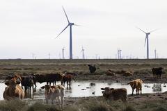 La energía eólica amenaza el bastión del petróleo de Texas