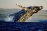 Este es el mejor destino para avistar ballenas en verano