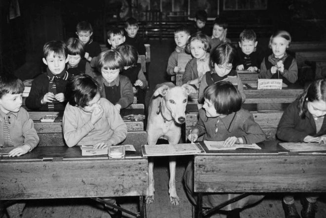 Billyboy, el perro que, en la década de los 30 , asistió a clase en un colegio inglés.