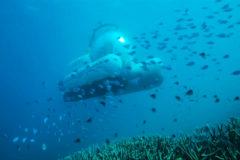 Australia estrena el primer submarino compartido