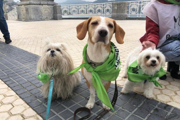Varios perros en el paseo de la Concha duante la movilización.