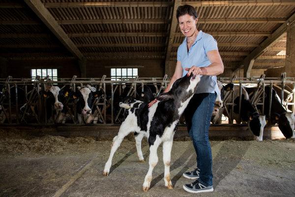 LA REVILLA DE SOBA/ CANTABRIA 7 Charo Arredondo ganadera de La Revilla de Soba con su ganado