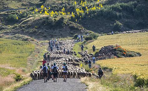Pastores y viajeros acompañan al rebaño a la Sierra del Alba.