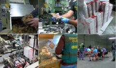 El auge de las fábricas clandestinas de cigarros falsos en España