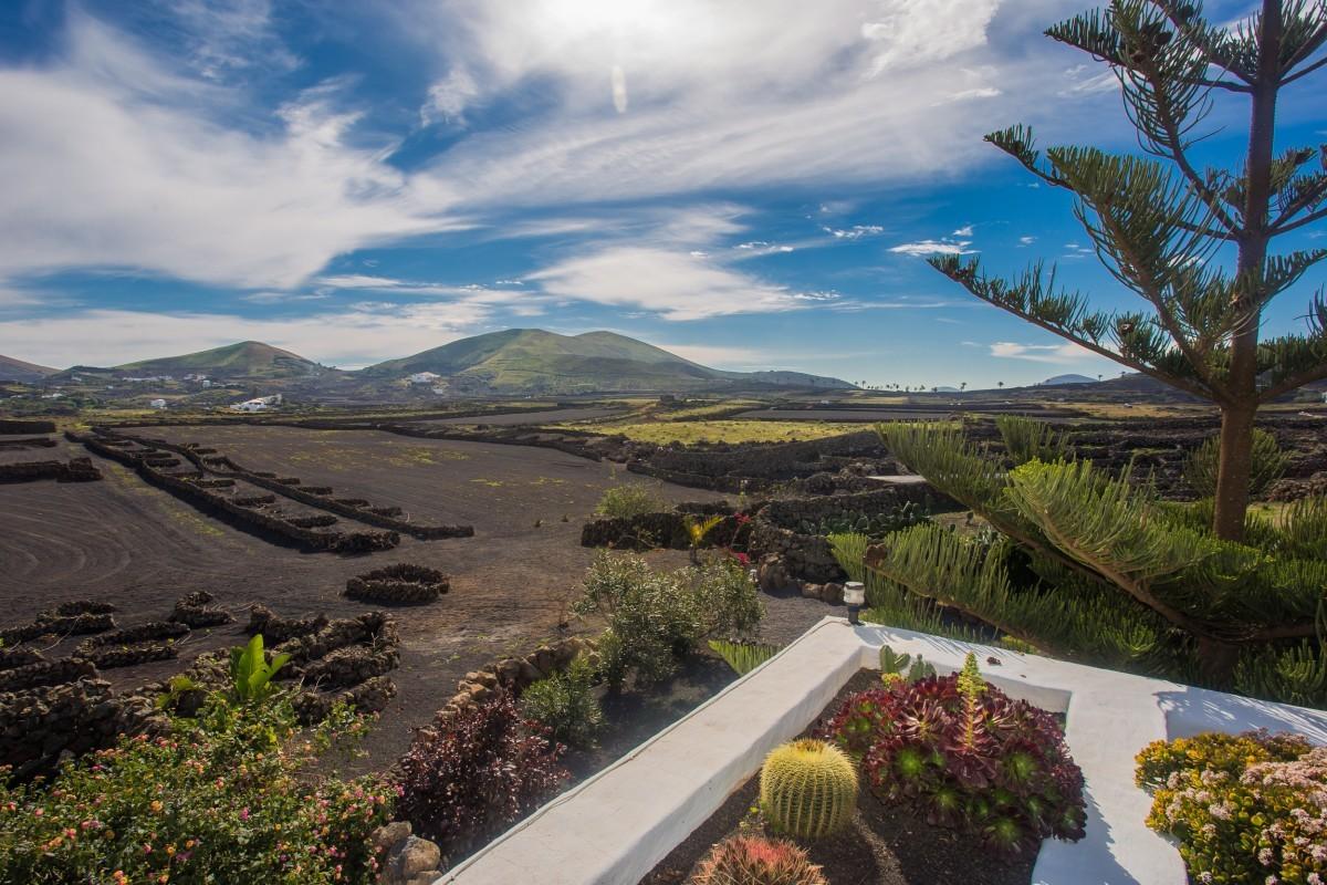 Viajar con tu mascota a las Islas Canarias es una de las opciones...