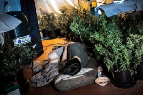 Un menor víctima de las mafias chinas durmiendo al lado de las plantas de marihuna.
