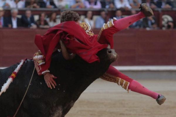 El cuarto toro de Adolfo Martín hunde todo el pitón izquierdo de Manuel Escribano, este jueves, en Las Ventas.