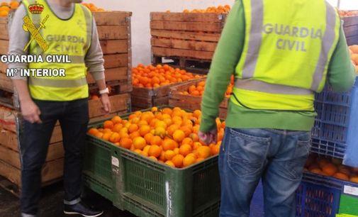 Una operación anterior de la Guardia Civil contra el robo de naranjas.