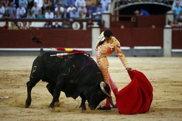 Extraordinario natural de Paco Ureña al quinto toro de Alcurrucén.
