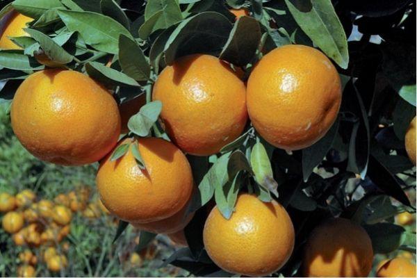 Fruxeresa recalca la limpieza del concurso de Frutas Ponche que ganó