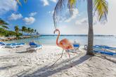 Conocida como <em>La Isla Feliz</em>, Aruba es todo lo que se le puede...