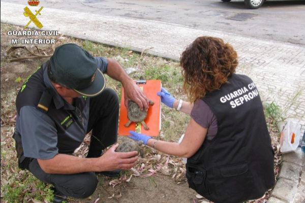 La Guardia Civil con una de las tortugas incautadas en la operación Blizzard